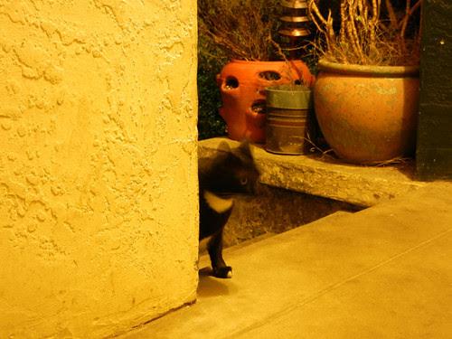 Cat _ 9880