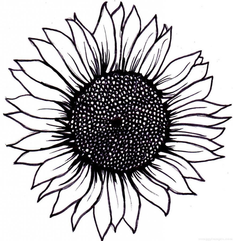 Sunflower Outline Drawing   Free download on ClipArtMag