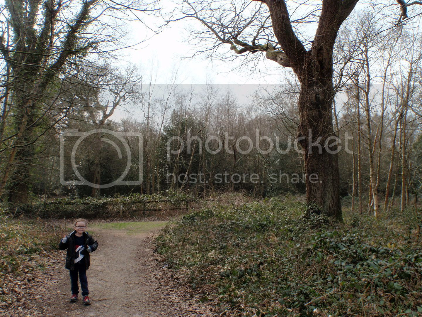 photo A walk in the local woods with Oliver.jpg