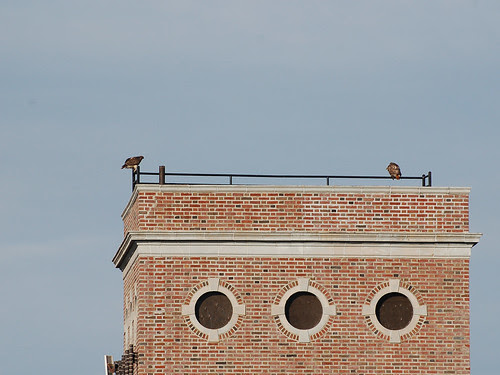 Norman and Isolde atop the Manny Wilson Towers