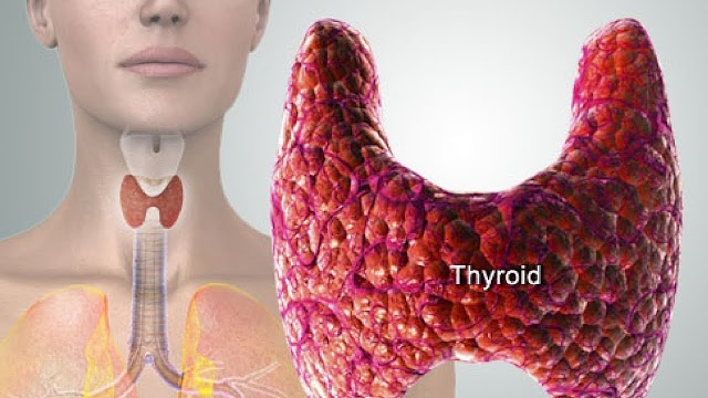 The most effective tips for a healthy Thyroid :