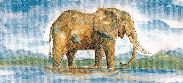 Elephant by Sophie Neville from 'Ride the Wings of Morning' her truelife book