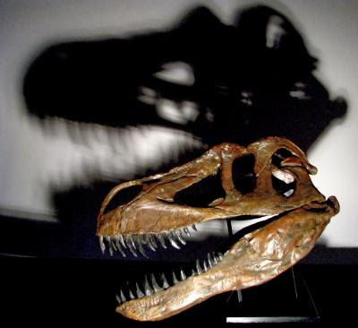 New Dinosaur Found In Portugal, Largest Terrestrial Predator From Europe - Interesting Always