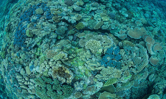 Ocean acidification slowing coral reef growth, study confirms | Environment | The Guardian