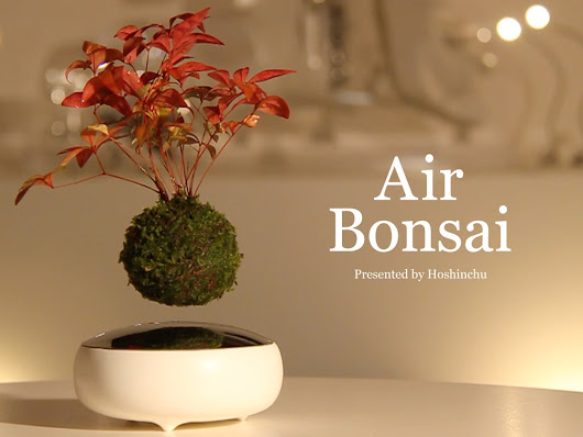 "Air Bonsai | Create your ""little star"" by Hoshinchu Air Bonsai Garden —  Kickstarter"