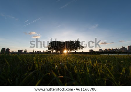 Sunrise On The Silhouette Branches Of Trees In The Morning 库存照片 461168980 : Shutterstock
