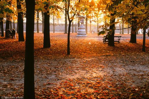 Autumn leaves in Jardin des Tuileries