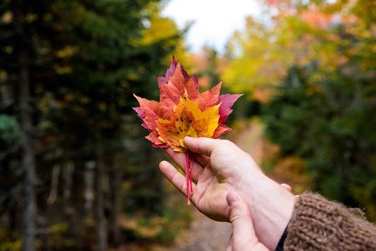 5 Ways to Get all up in Canada's Fall Colours | Book Hostels Direct for Best Rate