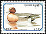 Eurasian Wigeon Anas penelope