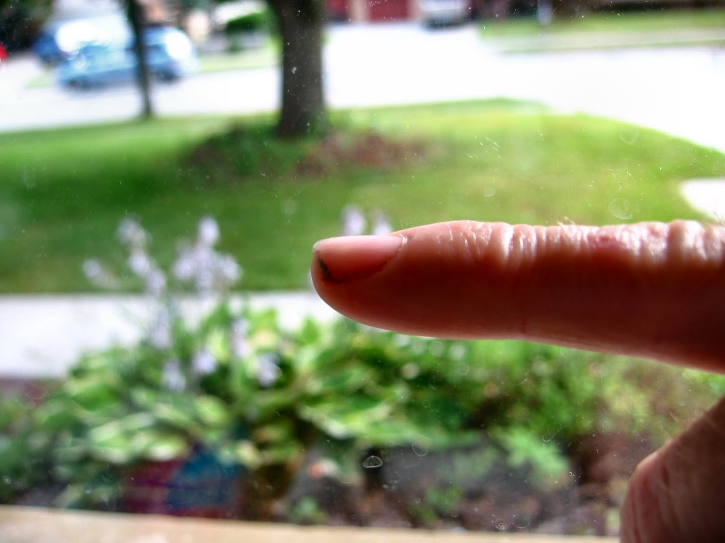 Finger and fingernail fully recovered after being smashed in May 2007.  Photo by Mike Fisk