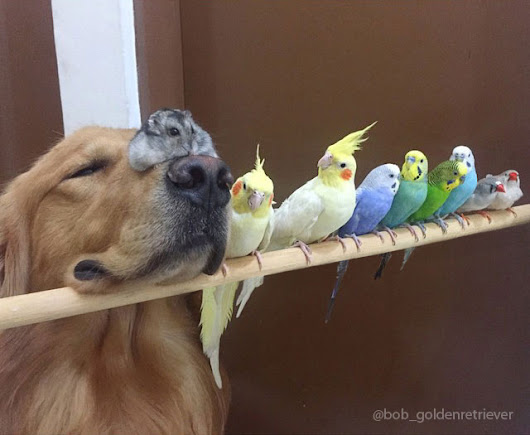 Hamster befriends a dog and 8 birds