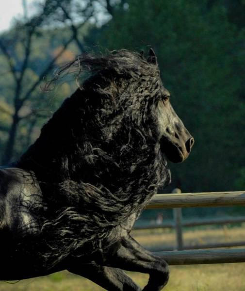 this_horse_might_have_the_worlds_most_fabulous_mane_640_08