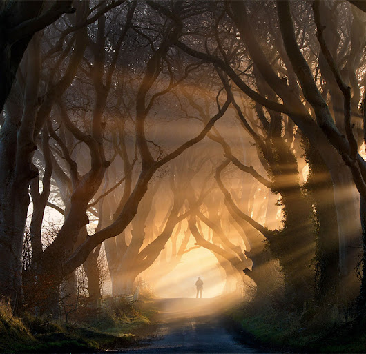 19 Magical Tree Tunnels You Should Definitely Take A Walk Through
