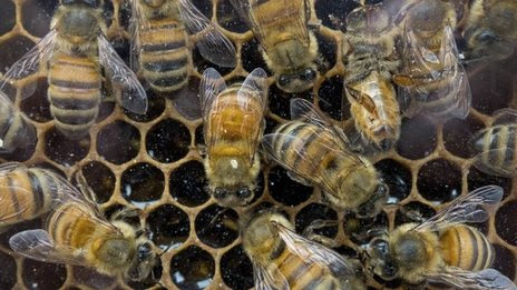 US sets up honey bee task force