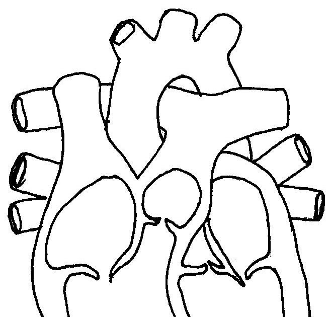 Wiring Diagram: 32 Heart Diagram No Labels