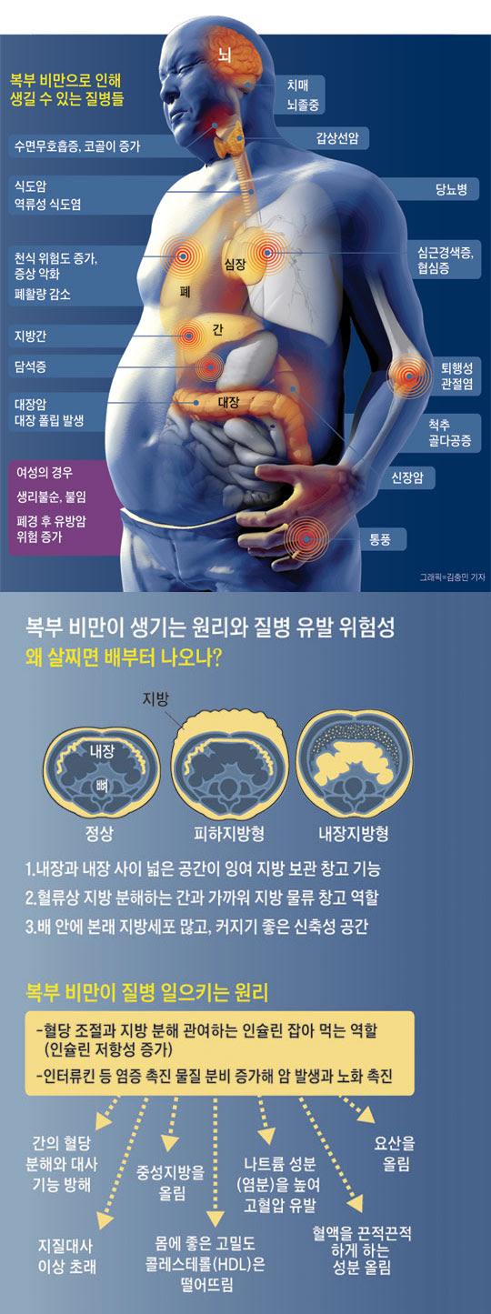 복부 비만으로 인해 생길 수 있는 질병들. 복부 비만이 생기는 원리와 질병 유발 위험성.