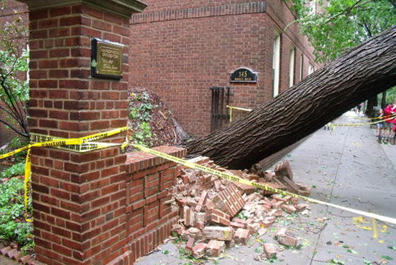 Irene Knocks Down Controversial 80 Year-Old Brooklyn Heights Elm Tree