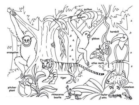 tropical jungle  rainforest animals coloring page kids
