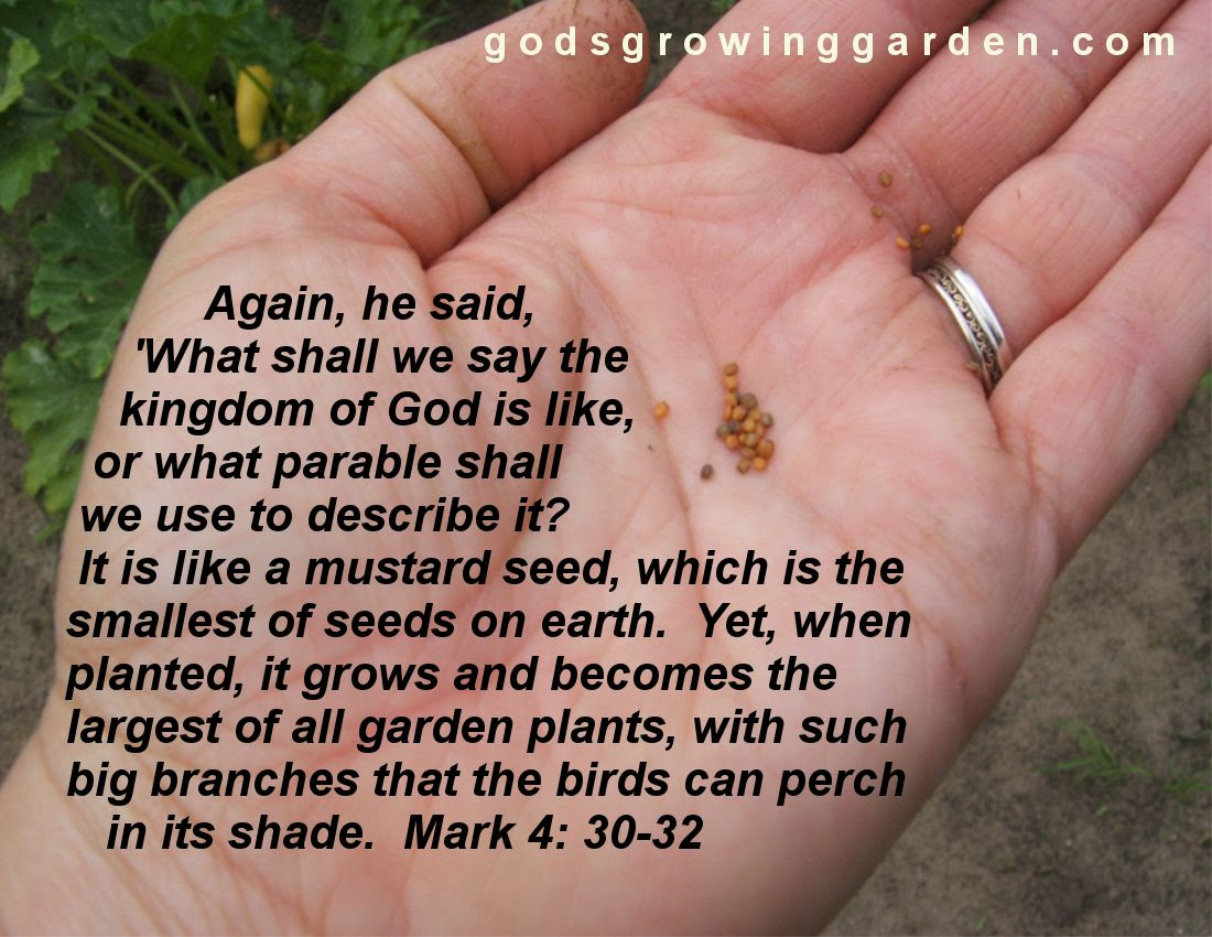 by Angie Ouellette-Tower for http://www.godsgrowinggarden.com/ photo SundaySeeds_zpsv6bqisnt.jpg
