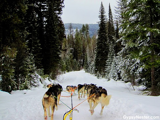 Mush Myth Busting: Dog Sledding in Montana | The GypsyNesters
