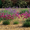 Best 10 Front Garden Ideas With Gravel Uk Pictures