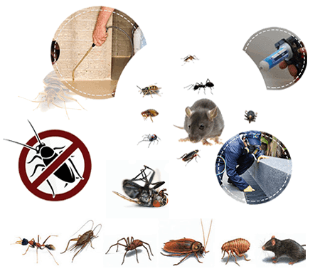 Pest Control Services - Cryonite for Bed Bugs Control, Bed Bugs Treatment, Industrial Pest Control,Commercial Pest Control,Residential Pest Control