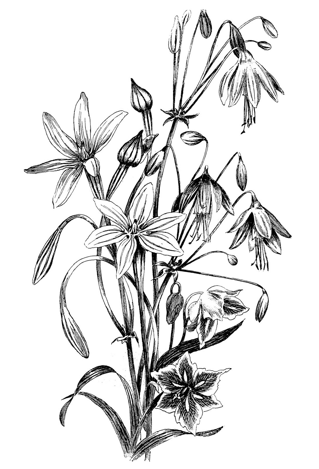 Free Drawings Of Flowers In Black And White Download Free Clip Art