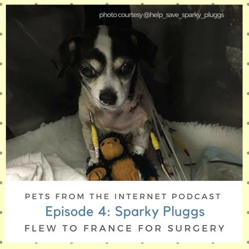 Episode 4: Sparky Pluggs Flew to France for Surgery by Pets From The Internet