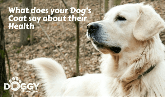 What Does Your Dog's Coat say about their Health? A Dog's Coat Health Review