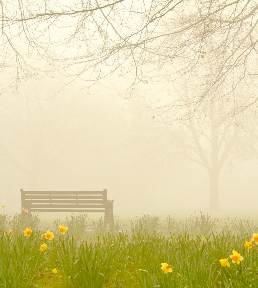 Daffodils and bench...