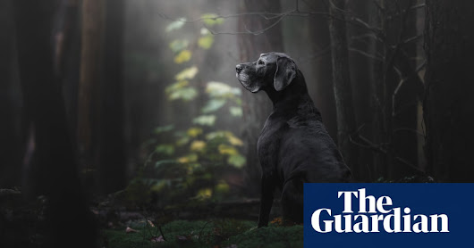 Dog Photographer of the Year 2018 – in pictures | Life and style | The Guardian