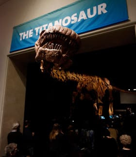 El titanosaurio hallado en la Patagonia, exhibido en Nueva York