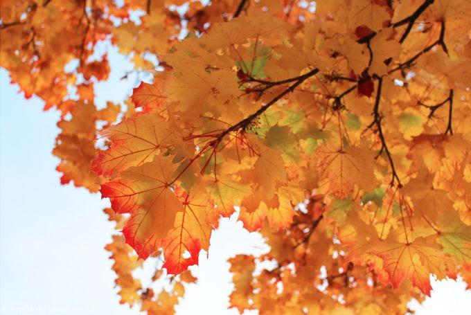 http://i402.photobucket.com/albums/pp103/Sushiina/cityglam/herbst1_zpscae0203d.jpg