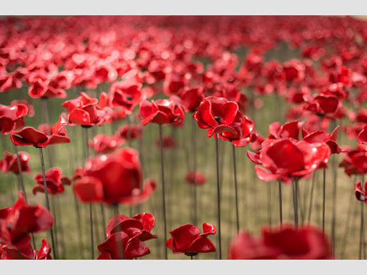 14-18 NOW & Liverpool City Council presents POPPIES: Weeping Window - Artinliverpool.com