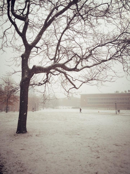 Beautiful, snowy day