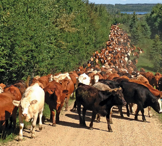 Know your grazing environment and keep your herd moving