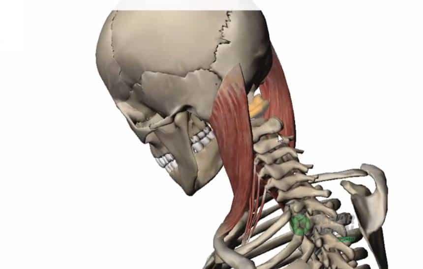 Resultado de imagem para epidemia de 'pescoço tecnológico'