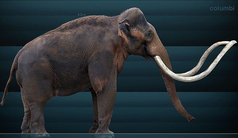 File:Mammuthus columbi Sergiodlarosa.jpg