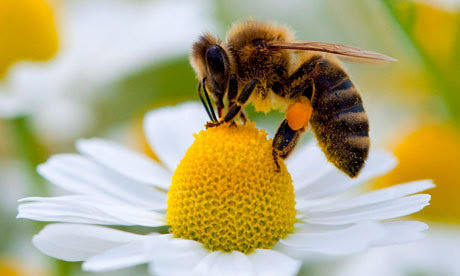 To produce a single pound of honey, a single bee would have to visit 2 million flowers