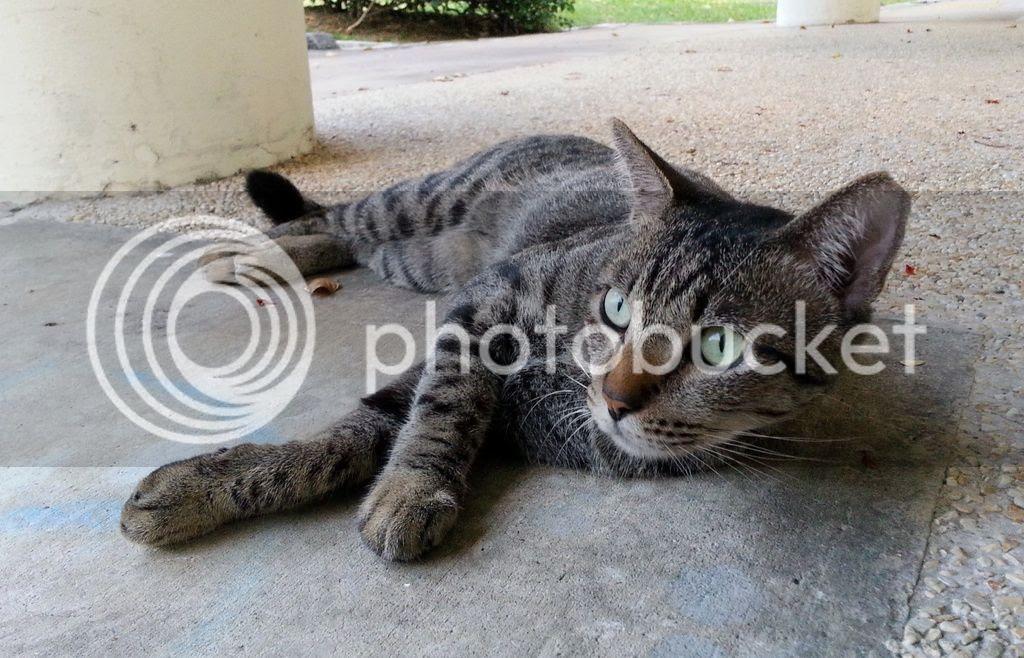 photo CatJRT17May02.jpg