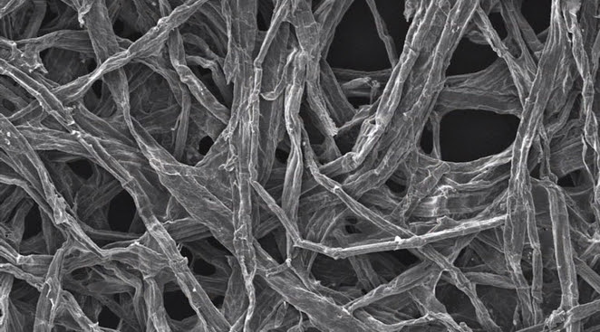Cellulose fibers were found to help nanobatteries keep their structure