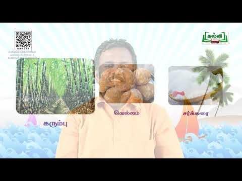 2nd Evs உணவும் உடல் நலமும்  பருவம்  அலகு 1 பகுதி 1 TM Kalvi TV