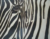Woodburn art Zebra upclose and personal - shawilson1