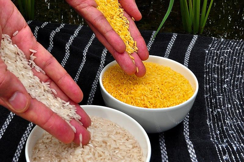 File:Golden Rice.jpg