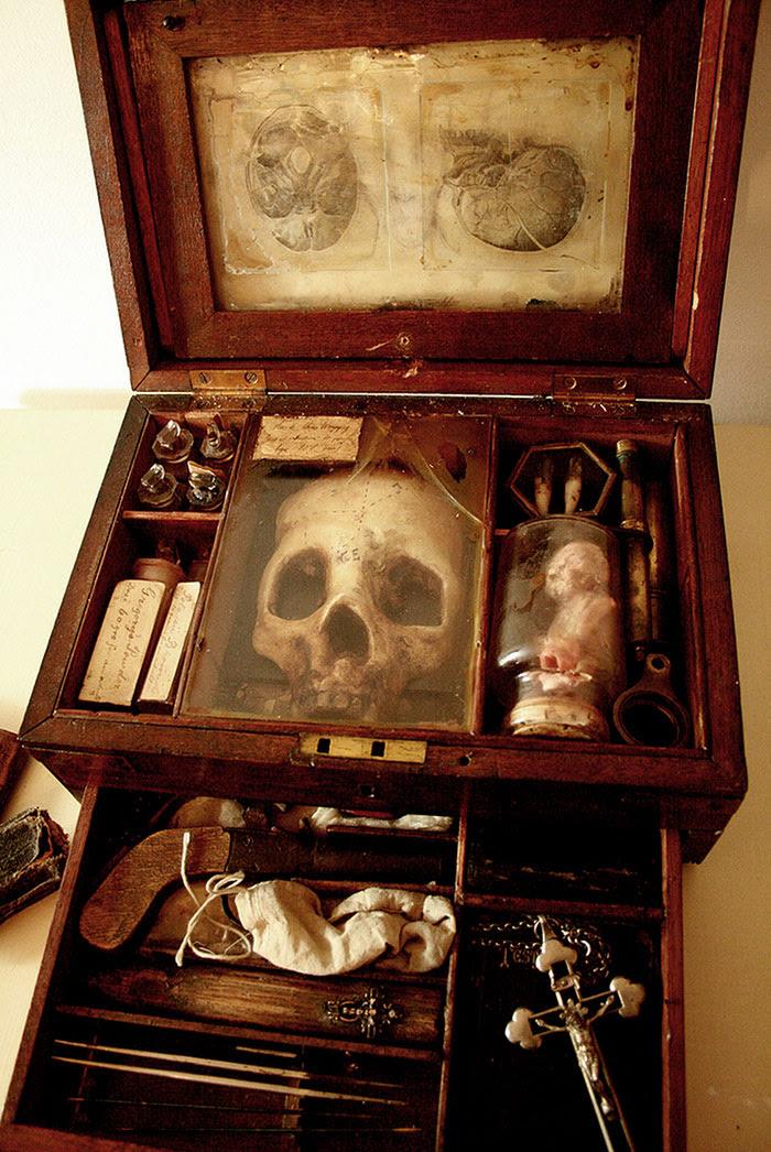 skulls-skeletons-thomas-theodore-merlin-home-london8