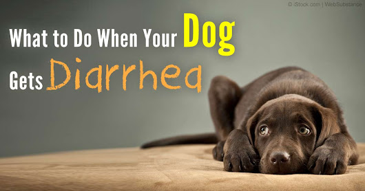 Diarrhea in Dogs: Don't Let It Catch You Unprepared