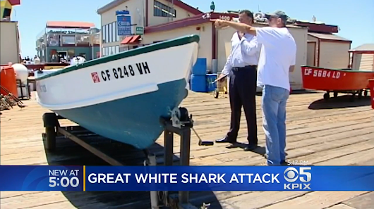 Great white shark sinks its teeth into fisherman's boat