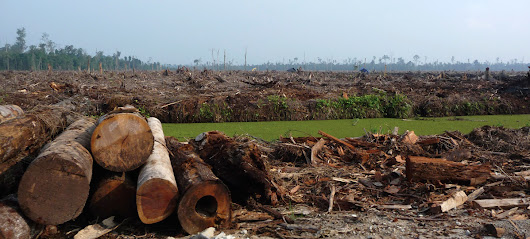 Tell TIAA: Say NO to Dirty Palm Oil!