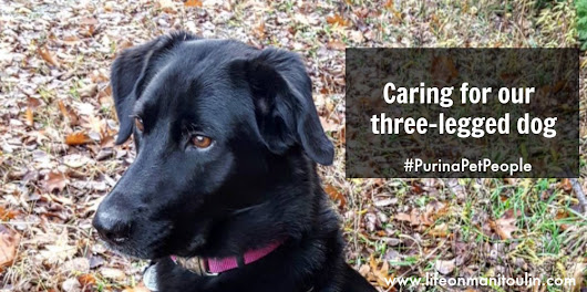 Caring for our Three-Legged Dog ~ #PurinaPetPeople
