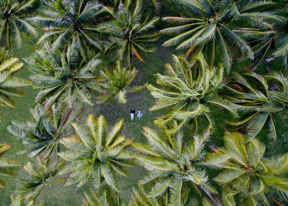 Casal deita de mãos dadas em meio a palmeiras esvoaçantes